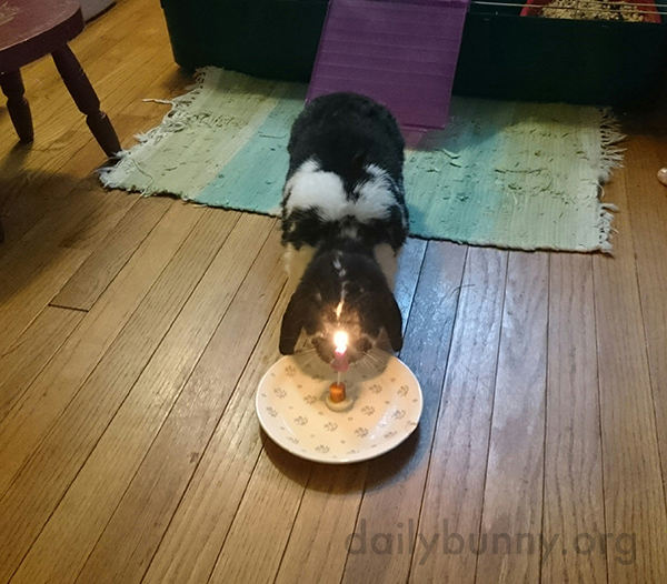 "Bunny Is About to Enjoy a Bunny-Sized Birthday ""Cake"""