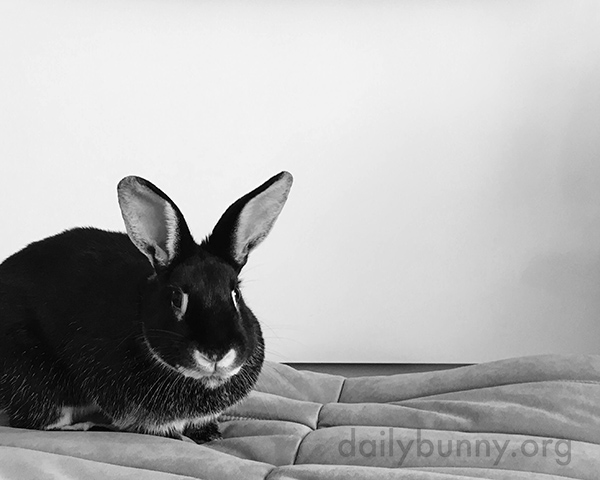 Bunny Is Always Ready to Explore New Surfaces and Textures