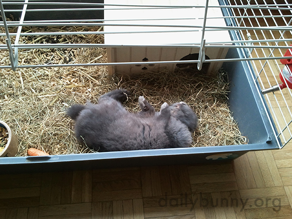 Bunny Just Flopped