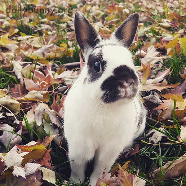 Bunny Sits Among All Those Crunchy Leaves