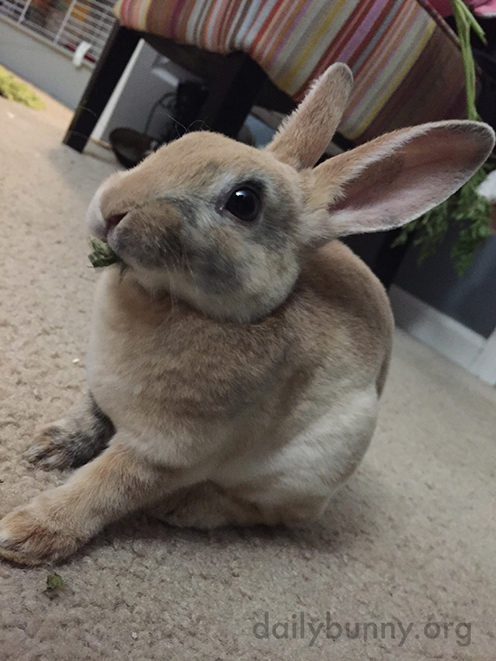 Bunny So Delicately Nibbles on a Bit of Green