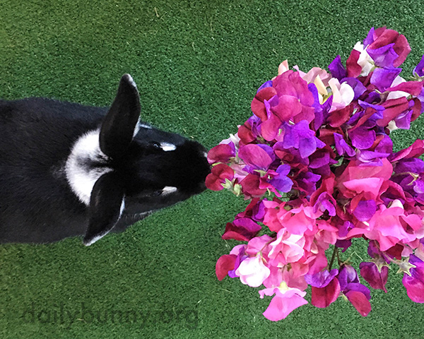 Bunny Stops to Smell the Flowers
