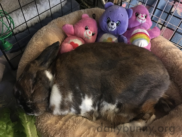 Bunny's So Tired She Couldn't Finish Her Greens