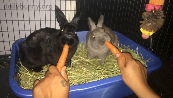 Two Bunnies, Two Hands, Two Carrots