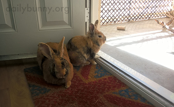 Bunnies Enjoy the View and Sunshine from the Comfort of the Indoors
