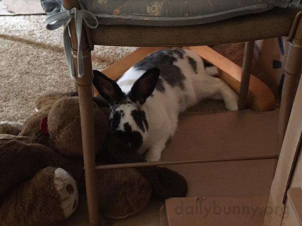 Bunny Cuddles with a Giant Plushie