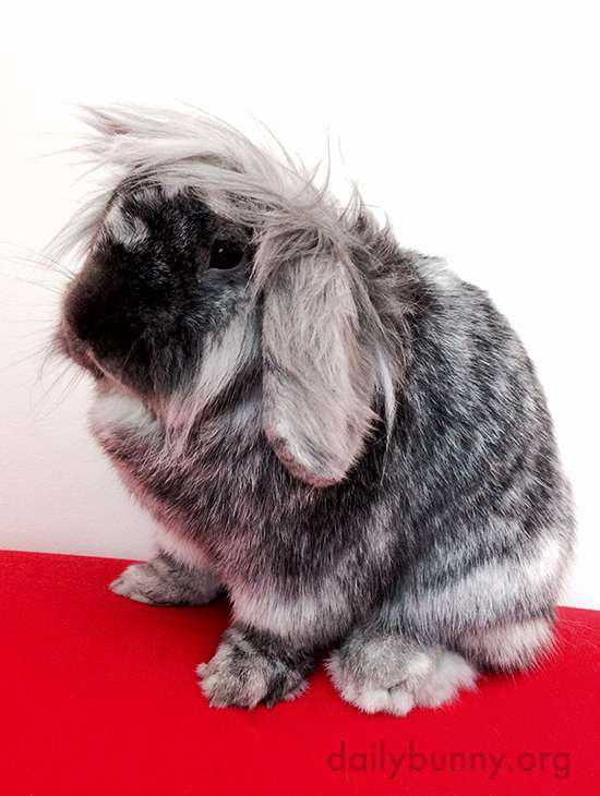 Bunny Experiments with Styling Her Fabulous Fur