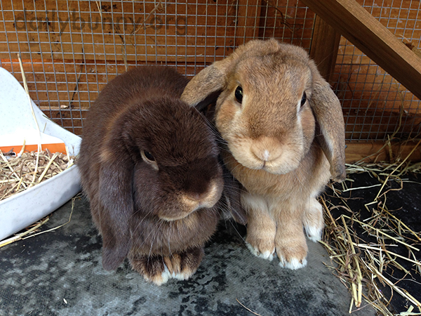 Bunny Friends Sit Together for Their Portrait