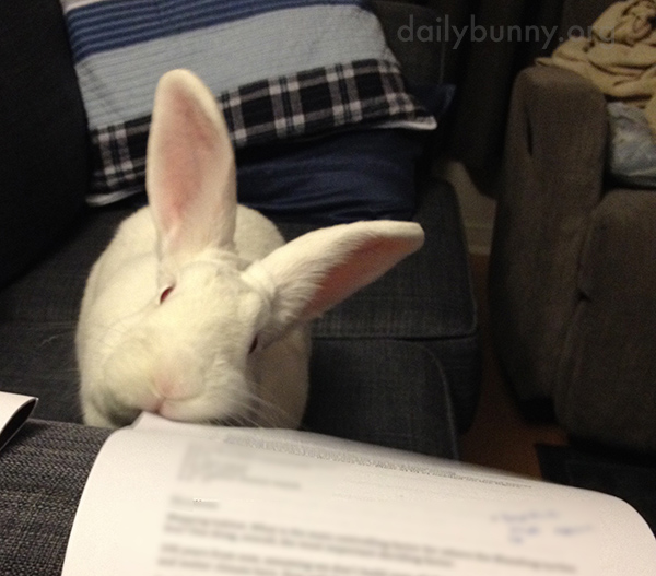 Bunny Helps with Paperwork