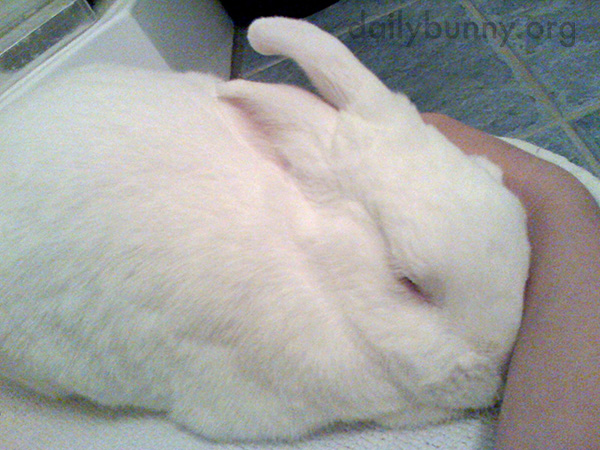 Bunny Seems to Want Some Attention Paid to His Head