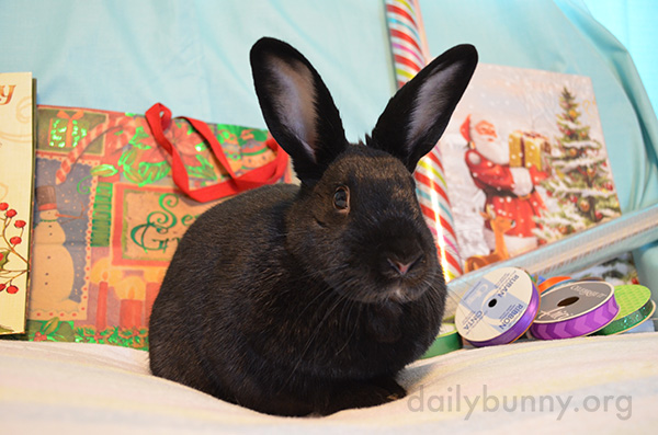 Bunny Will Supervise the Wrapping of Christmas Presents