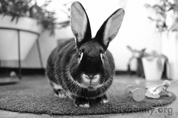 Bunny's Big Eyes Are Full of Wonder, Inquisitiveness, Hope, and Innocence