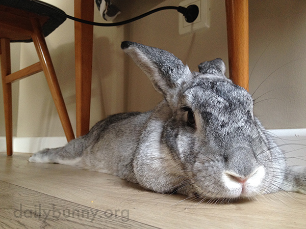 Bunny's Favorite Chill-Out Spot Is Under the Table 2