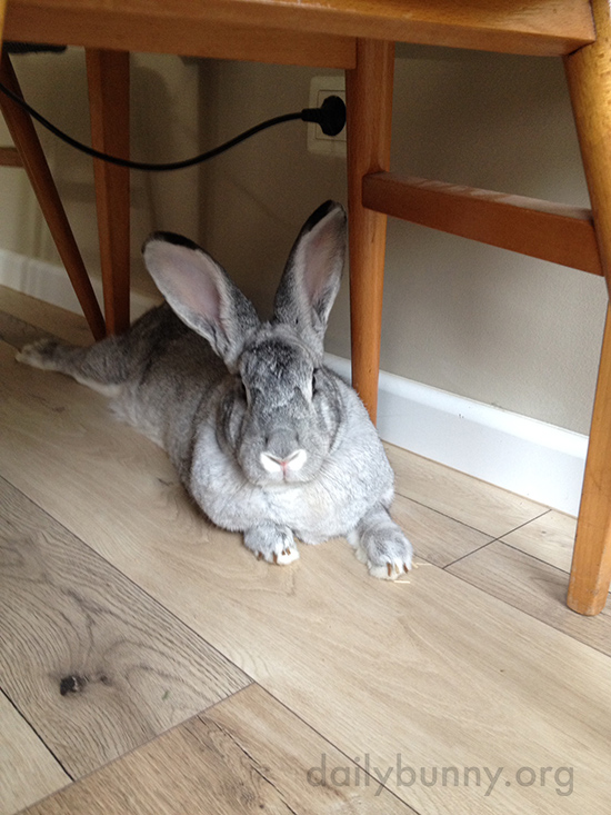Bunny's Favorite Chill-Out Spot Is Under the Table 3