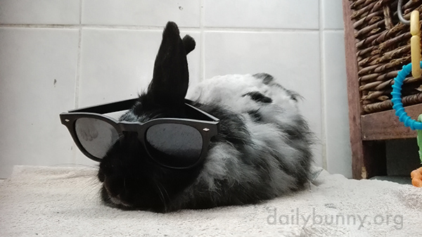 Bunny's Ready for It to Be Summer Again