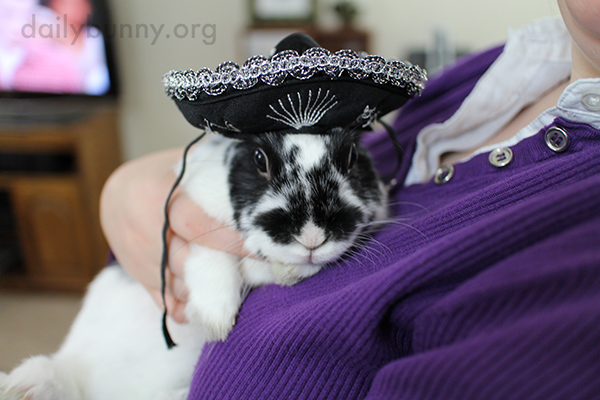 Bunny's Sombrero Matches Her Fur