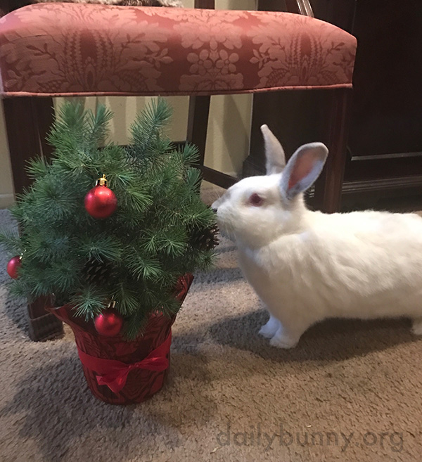 It's the Daily Bunny's Christmas 2016 Mega-Post! 10