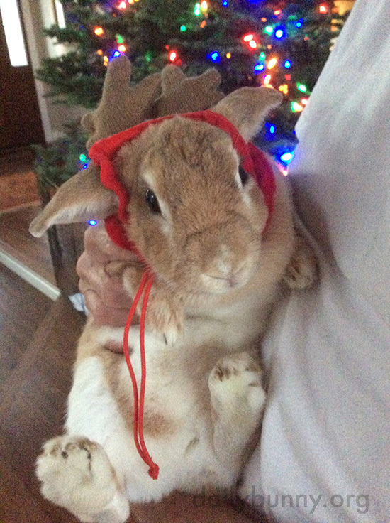 It's the Daily Bunny's Christmas 2016 Mega-Post! 18