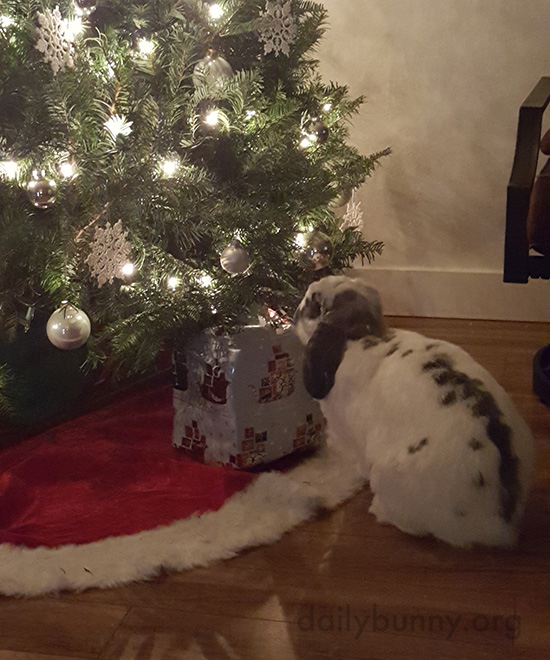 It's the Daily Bunny's Christmas 2016 Mega-Post! 19