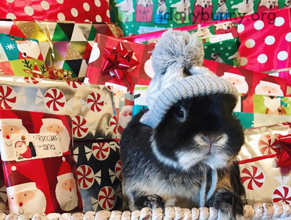 It's the Daily Bunny's Christmas 2016 Mega-Post! 2