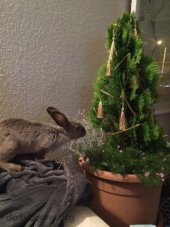 It's the Daily Bunny's Christmas 2016 Mega-Post! 22
