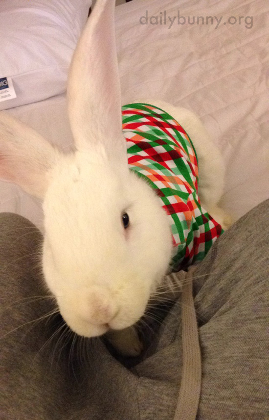 It's the Daily Bunny's Christmas 2016 Mega-Post! 23