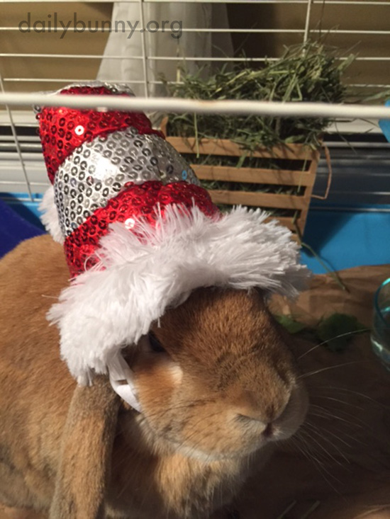 It's the Daily Bunny's Christmas 2016 Mega-Post! 24