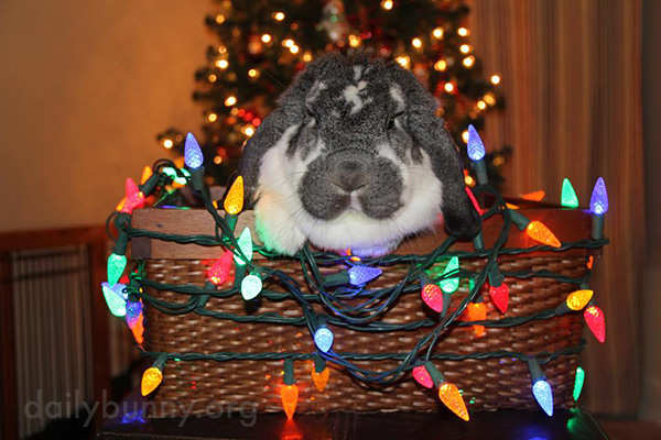 It's the Daily Bunny's Christmas 2016 Mega-Post! 3