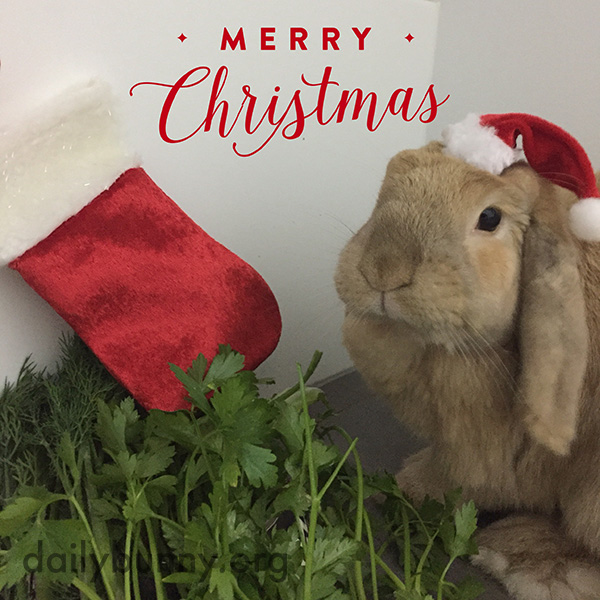 It's the Daily Bunny's Christmas 2016 Mega-Post! 5