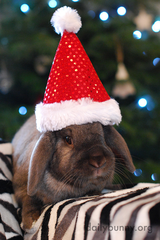 It's the Daily Bunny's Christmas 2016 Mega-Post! 6