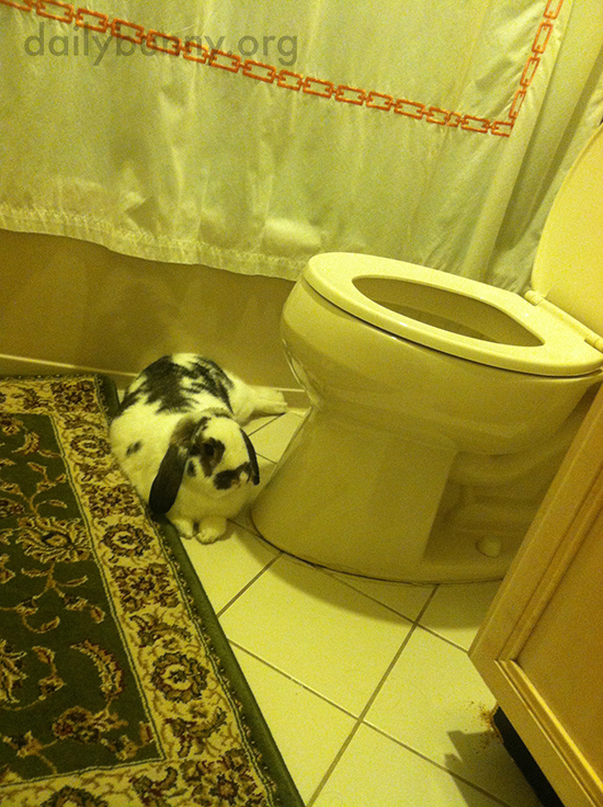 Nobody Uses the Bathroom Unless Bunny Gets a Treat 1