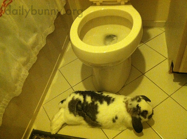 Nobody Uses the Bathroom Unless Bunny Gets a Treat 2