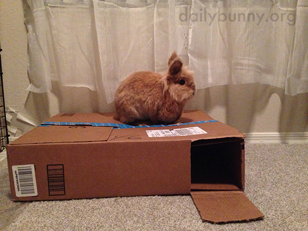 Bunny Can Sit on the Box or in the Box