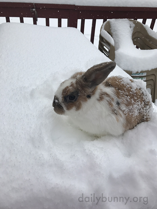 Bunny Checks Out the Newly-Fallen Snow 1