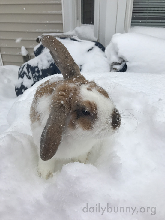 Bunny Checks Out the Newly-Fallen Snow 2