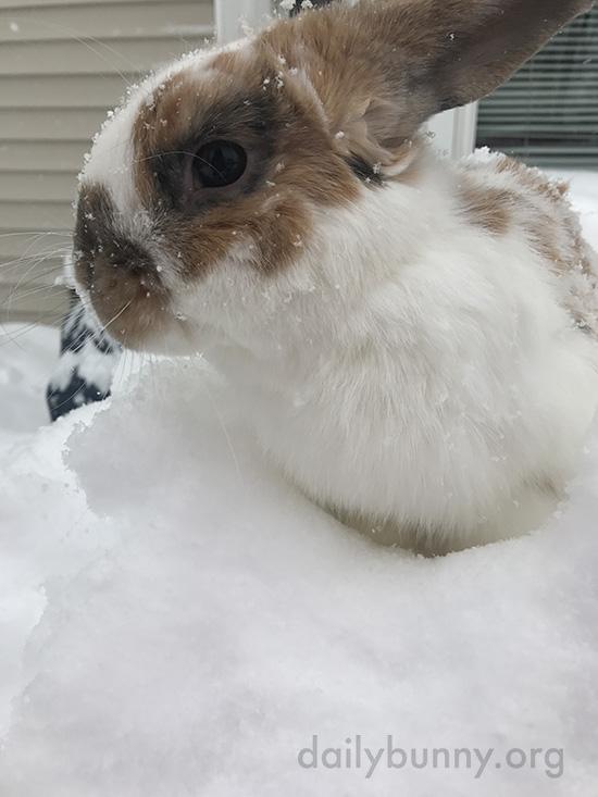 Bunny Checks Out the Newly-Fallen Snow 3