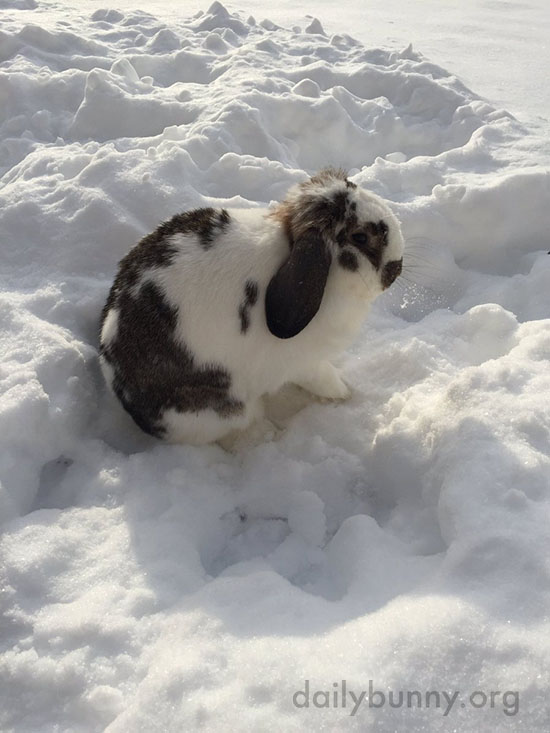 Bunny Explores the Snow 3
