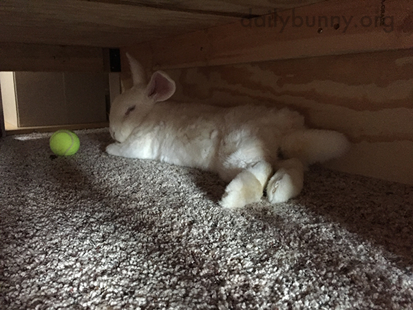 Bunny Finds a Dark, Quiet Spot for a Nap