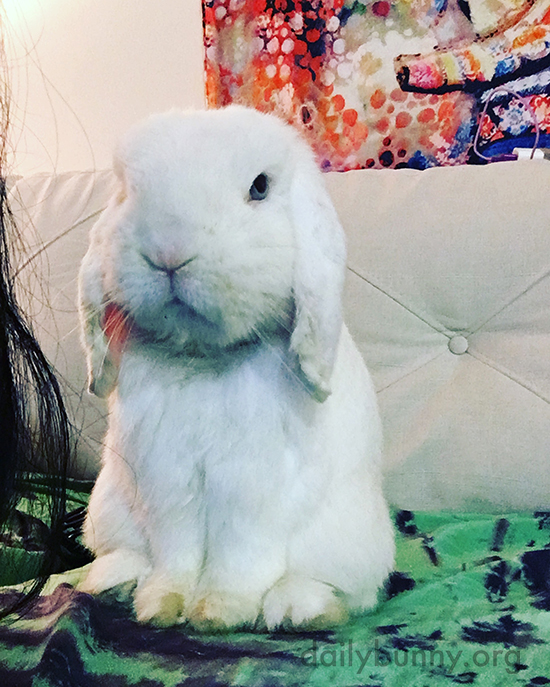 Bunny Gives the Camera a Little Side-Eye