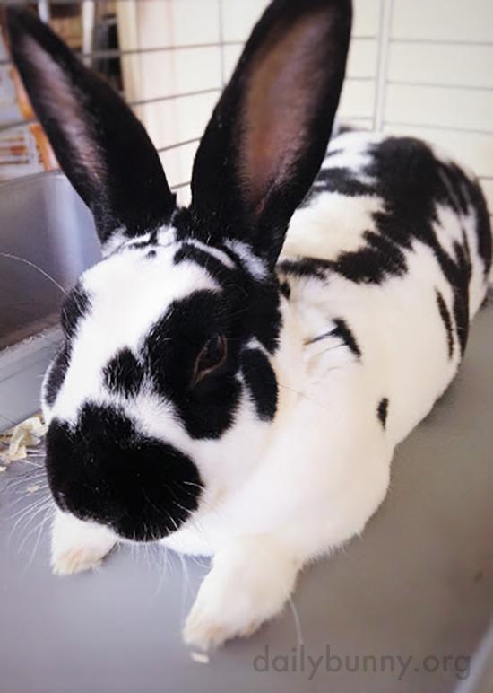 Bunny Is Always Listening