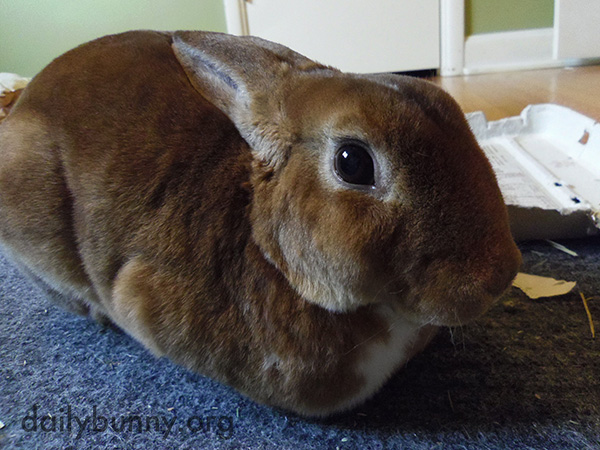 Bunny Is a Velvety Loaf
