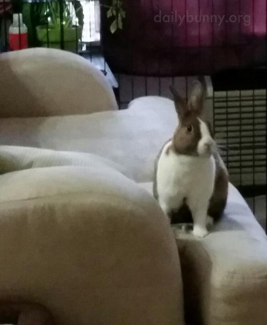 Bunny Plans Her Next Mischief