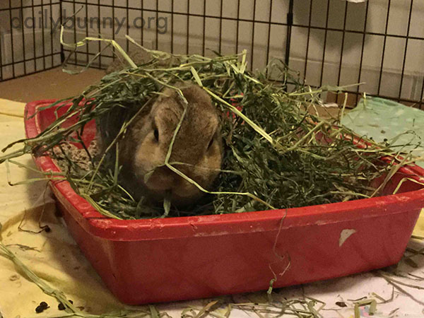 Bunny Prefers to Cover Herself in Her Food Before She Eats It 1