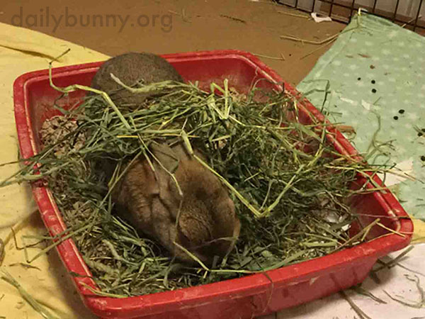 Bunny Prefers to Cover Herself in Her Food Before She Eats It 3