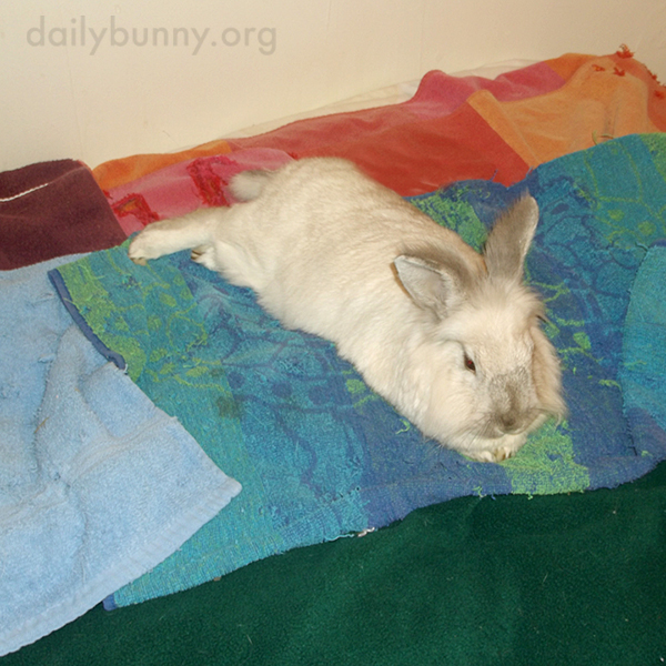 Bunny Stretches Out on a Colorful Bed