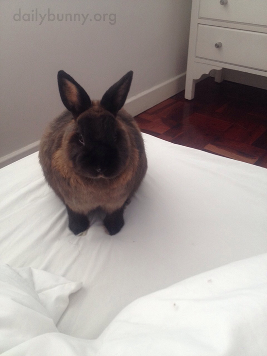 Bunny Will Supervise the Making of the Bed