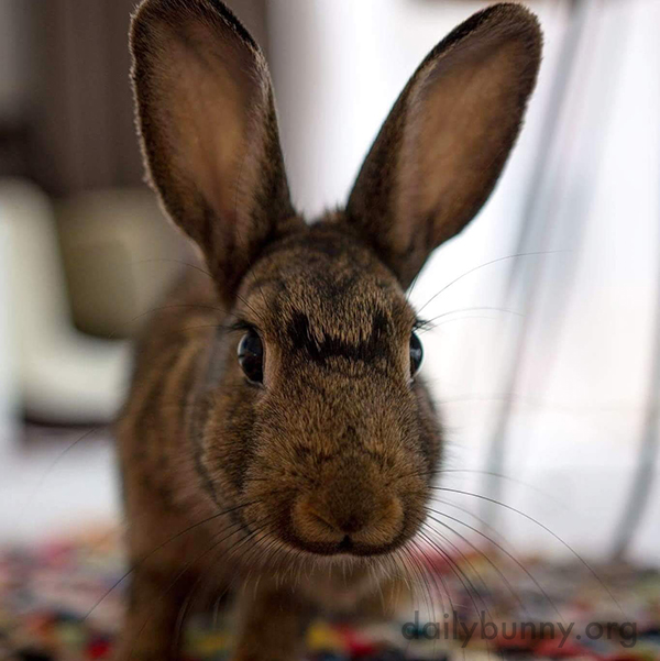 Curious Bunny Sniffs Out the Camera