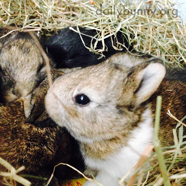 Tiny Baby Bunnies Cuddle Tightly Together
