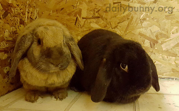 Bunnies Don't Need Much to Enjoy Each Other's Company