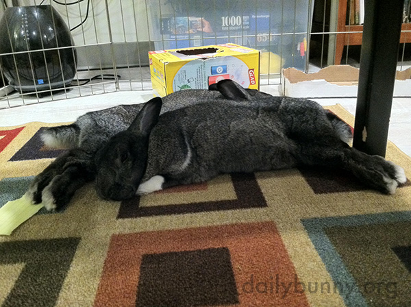 Bunnies Nap Head to Feet